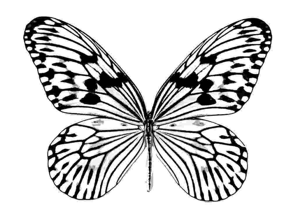 butterfly coloring pages free printable simple butterfly coloring pages getcoloringpagescom free printable pages butterfly coloring