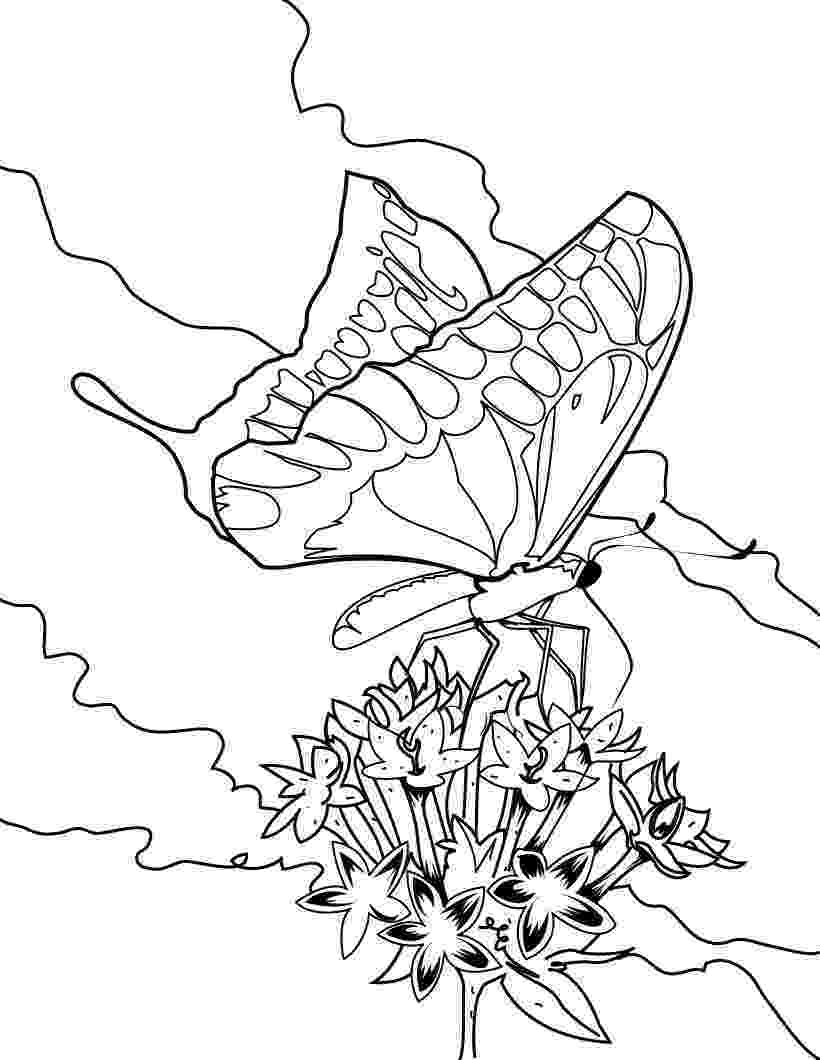 butterfly pictures to colour and print free printable butterfly coloring pages for kids colour to and print butterfly pictures