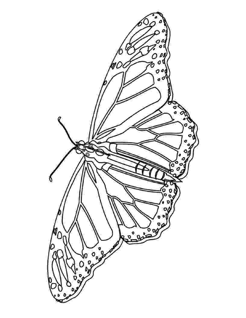 butterfly pictures to colour and print little butterfly insects coloring pages for kids to to pictures print butterfly and colour