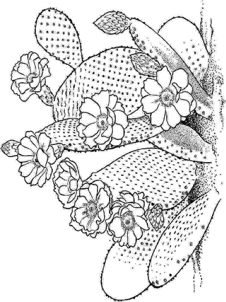 cactus pictures to color free printable cactus coloring pages for kids color pictures to cactus