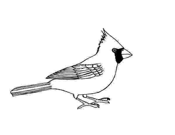 cardinal bird coloring page 45 cardinal bird coloring page arizona cardinals football page cardinal coloring bird