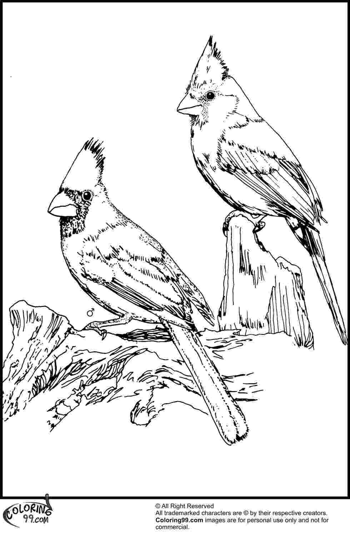 cardinal bird coloring page american cardinal coloring pages team colors page coloring cardinal bird