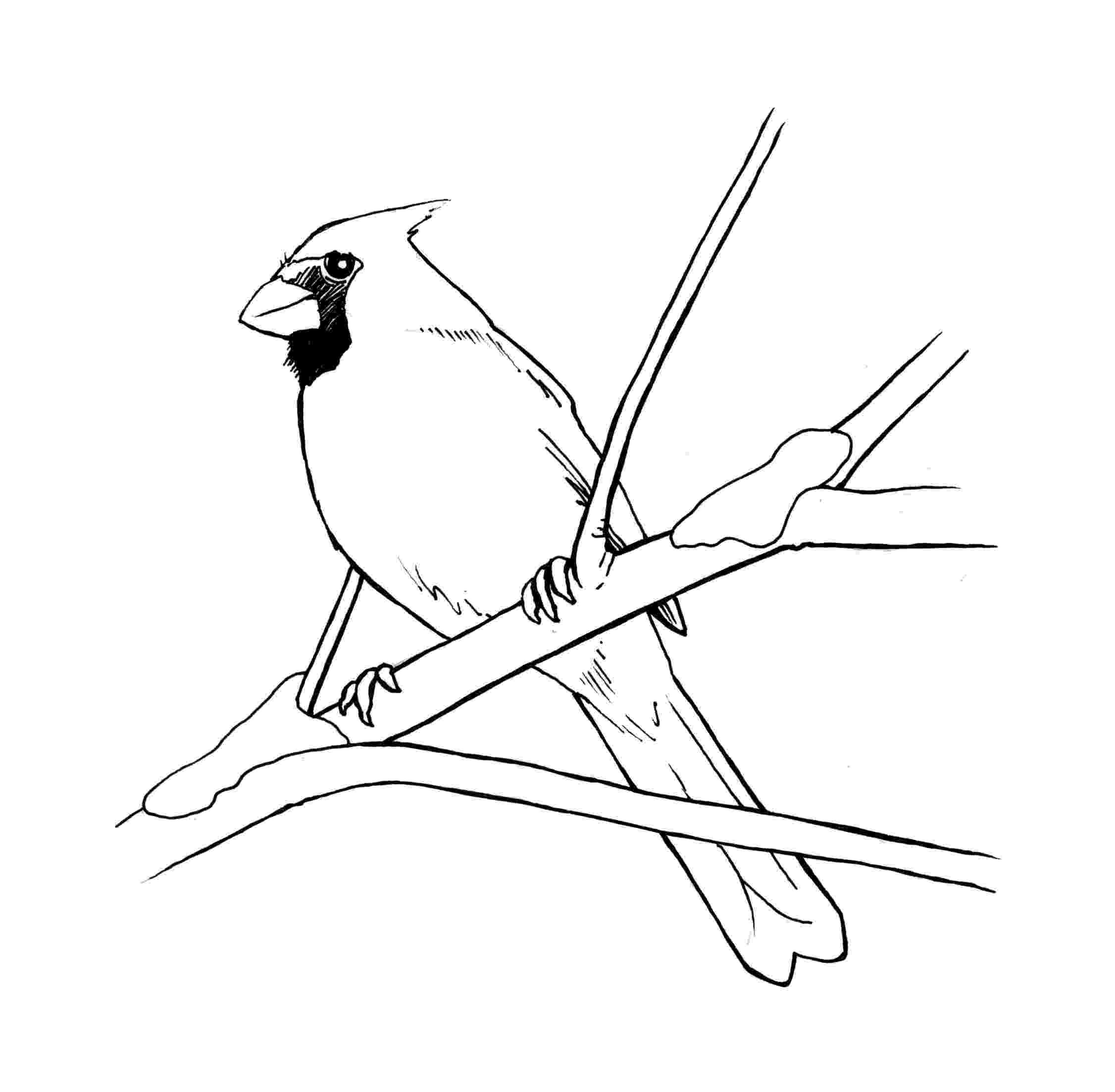 cardinal bird coloring page cardinal bird image coloring page cardinal bird image coloring bird page cardinal