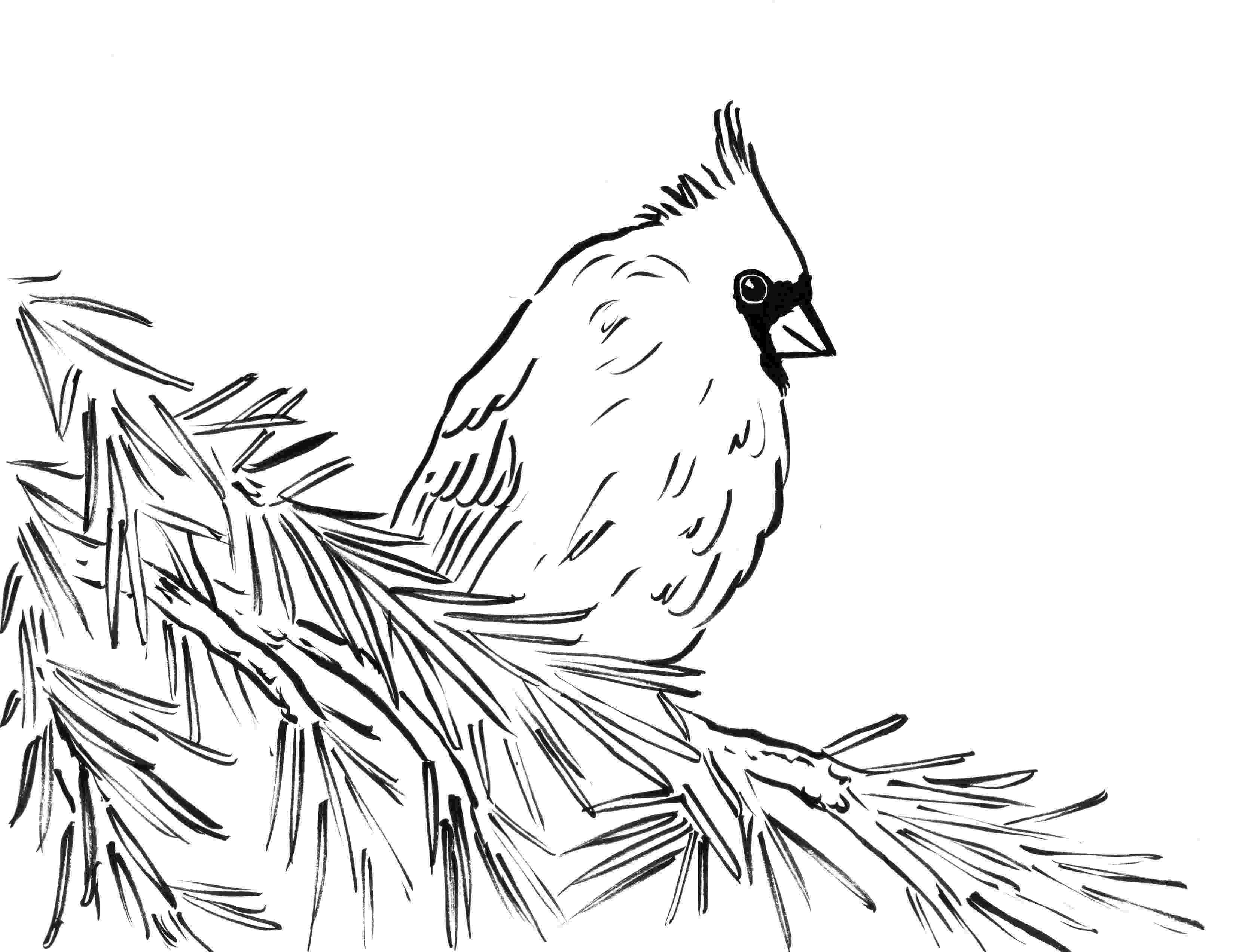 cardinal bird coloring page cardinal coloring pages getcoloringpagescom bird cardinal page coloring