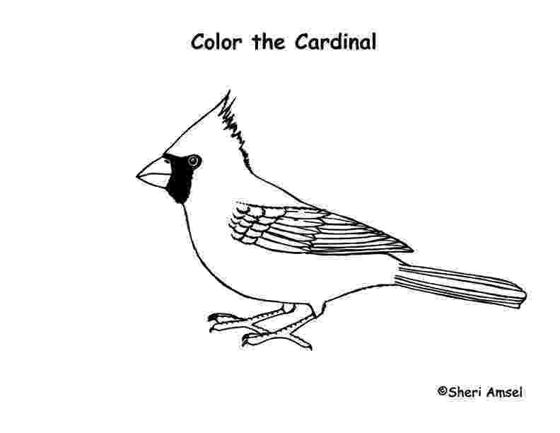 cardinal bird coloring page northern cardinal coloring page free printable coloring bird page coloring cardinal