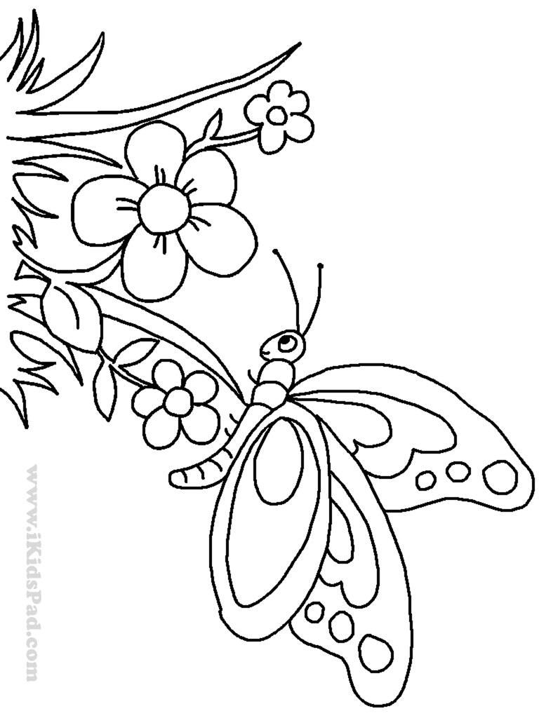 cartoon butterfly pictures to color free printable butterfly coloring pages for kids color pictures to butterfly cartoon