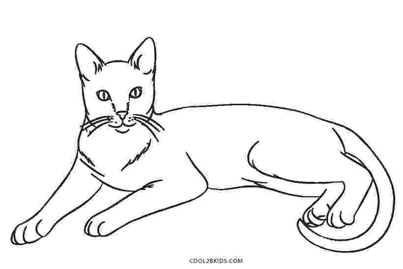 cat coloring book pages exotic shorthair cat coloring page free printable book coloring cat pages