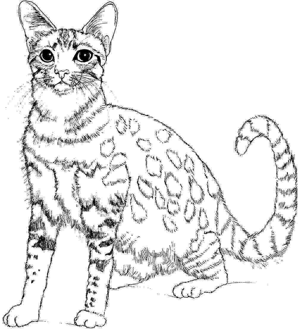 cat coloring pages free printable cats to color for kids cats kids coloring pages cat coloring printable free pages