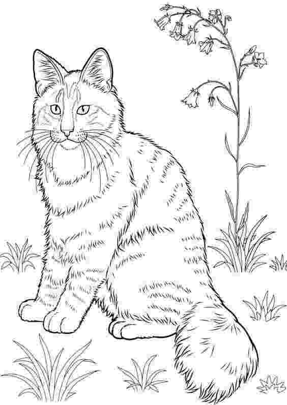 cat coloring pages to print 30 free printable cat coloring pages cat to coloring print pages