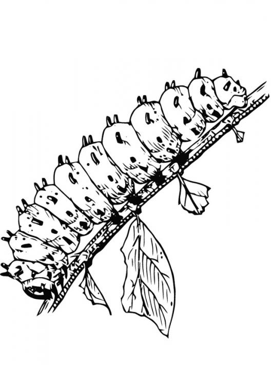 caterpillar for coloring caterpillar coloring page coloring page book for kids for caterpillar coloring