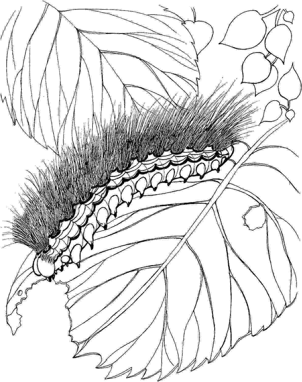 caterpillar for coloring printable caterpillar coloring pages for kids cool2bkids for caterpillar coloring