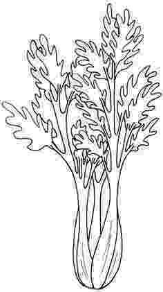 celery coloring page 13 best vegetable patterns images vegetable coloring celery page coloring