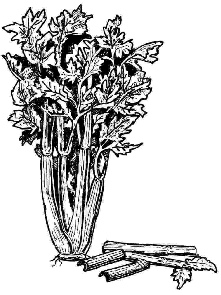 celery coloring page celery coloring pages download and print celery coloring celery page coloring 1 1