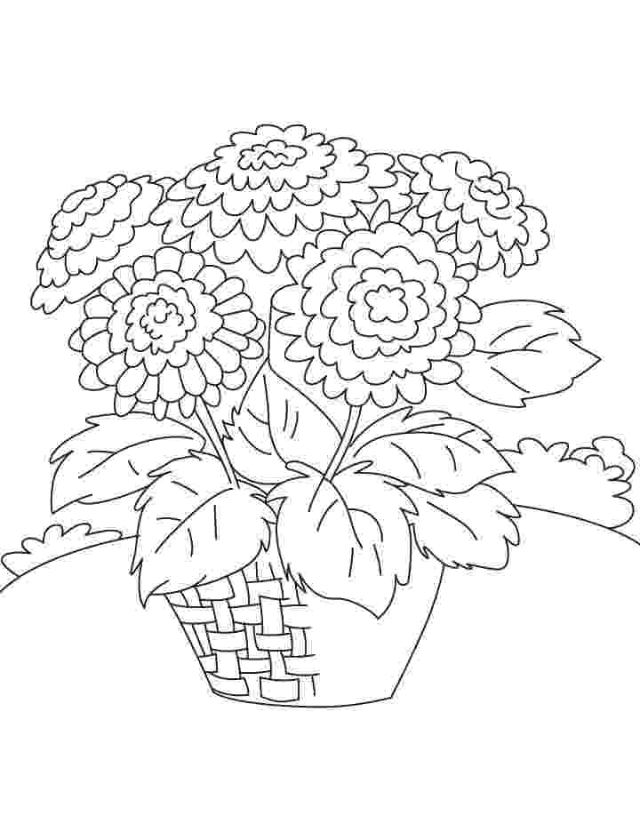 chrysanthemum coloring page chrysanthemum coloring pages to download and print for free chrysanthemum coloring page