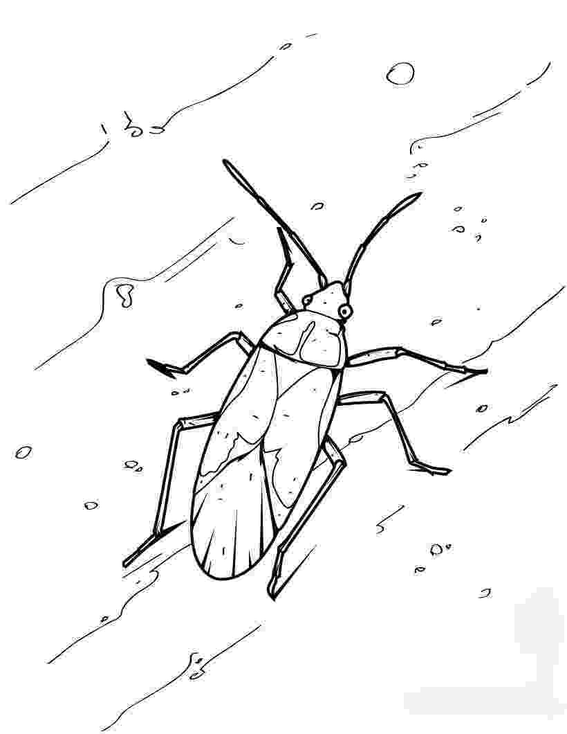 cockroach coloring page american cockroach coloring page free printable coloring cockroach page coloring