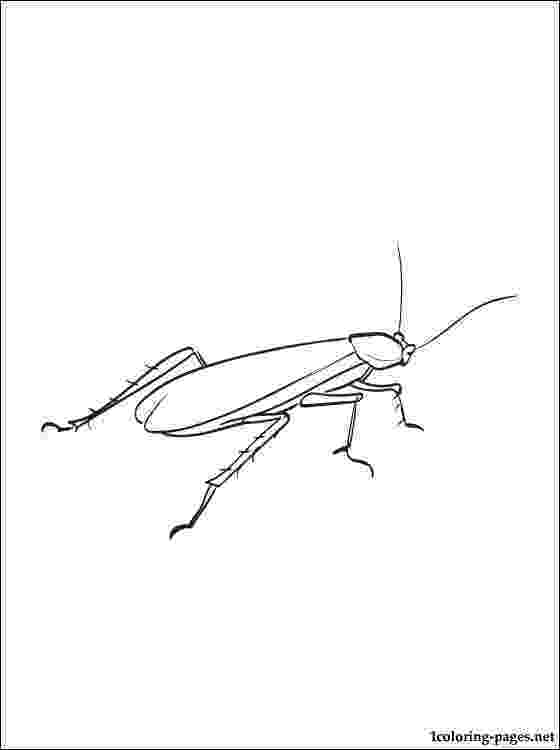cockroach coloring page cockroach coloring pages to download and print for free coloring cockroach page