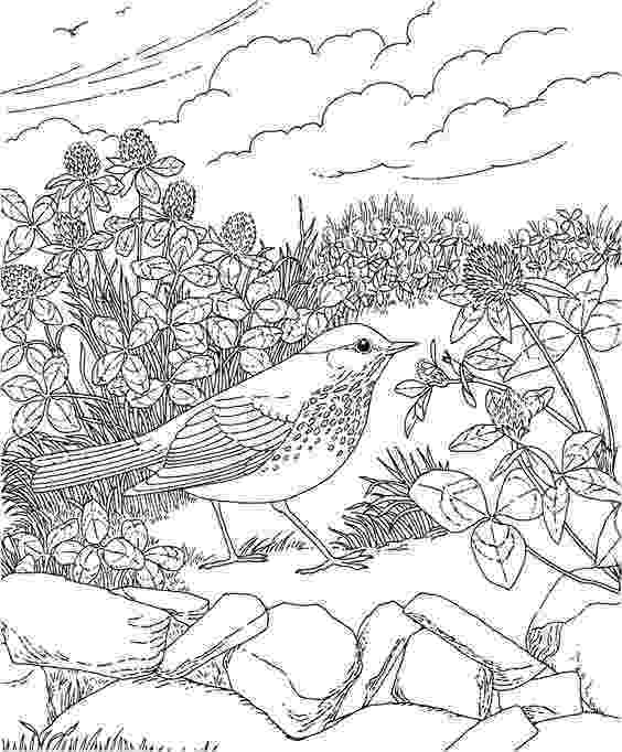 colorado state bird california printables california missions wordsearch state colorado bird