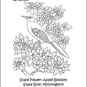 colorado state bird colorado state symbols coloring page free printable state colorado bird