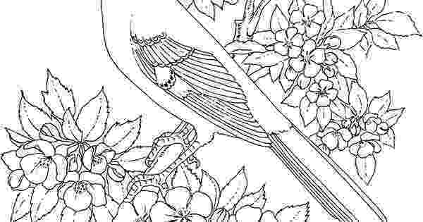 colorado state bird free printable coloring page arkansas state bird and colorado bird state
