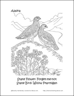 colorado state bird free printable coloring pagevermont state bird and colorado state bird