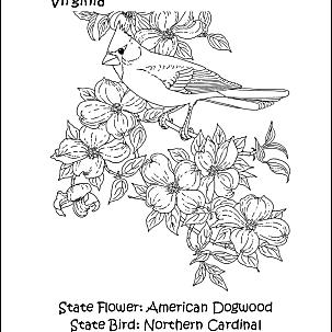 colorado state bird new york wordsearch crossword puzzle and more state bird colorado