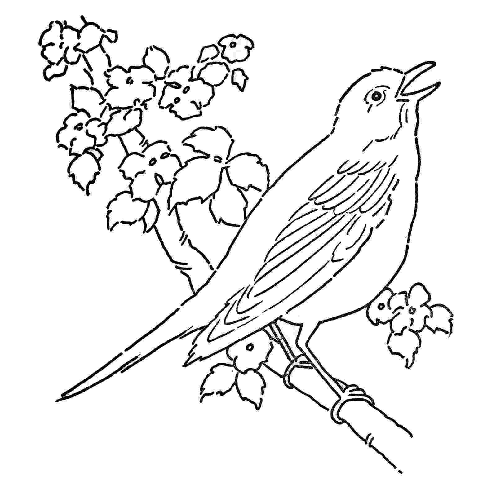 coloring bird line art coloring page bird with blossoms the bird coloring