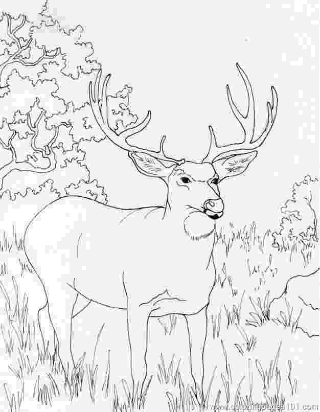 coloring book deer 240 best images about color animals on pinterest deer coloring book