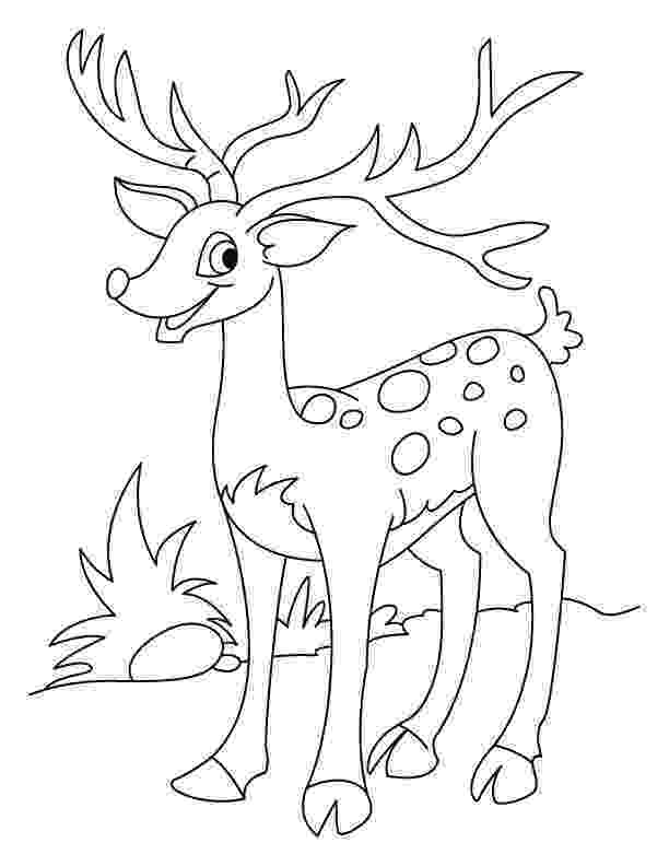 coloring book deer deer coloring pages to download and print for free coloring book deer