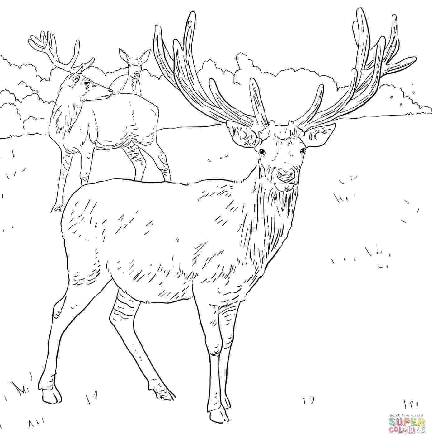 coloring book deer deer zentangle coloring page free printable coloring pages book coloring deer
