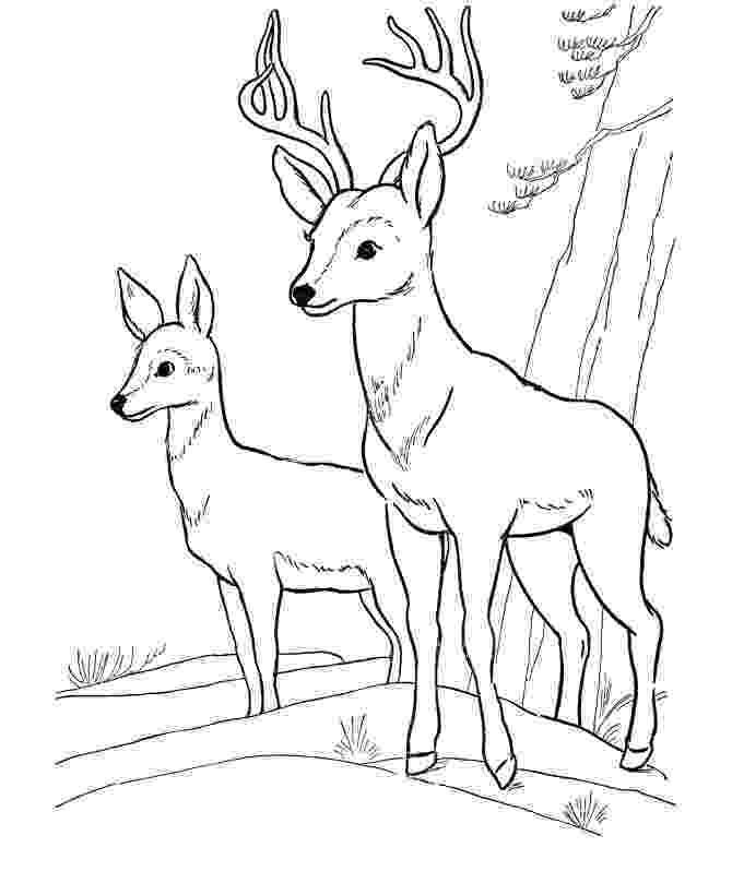 coloring book deer free printable deer coloring pages for kids book deer coloring