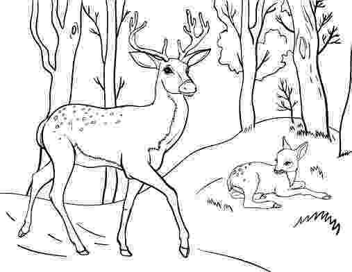 coloring book deer mule deer coloring page coloring home coloring deer book