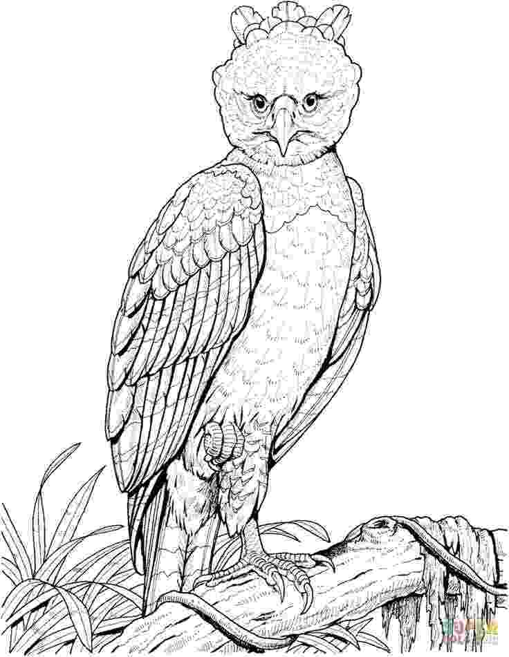 coloring book eagle 21 best eagle coloring pages images on pinterest eagles coloring eagle book