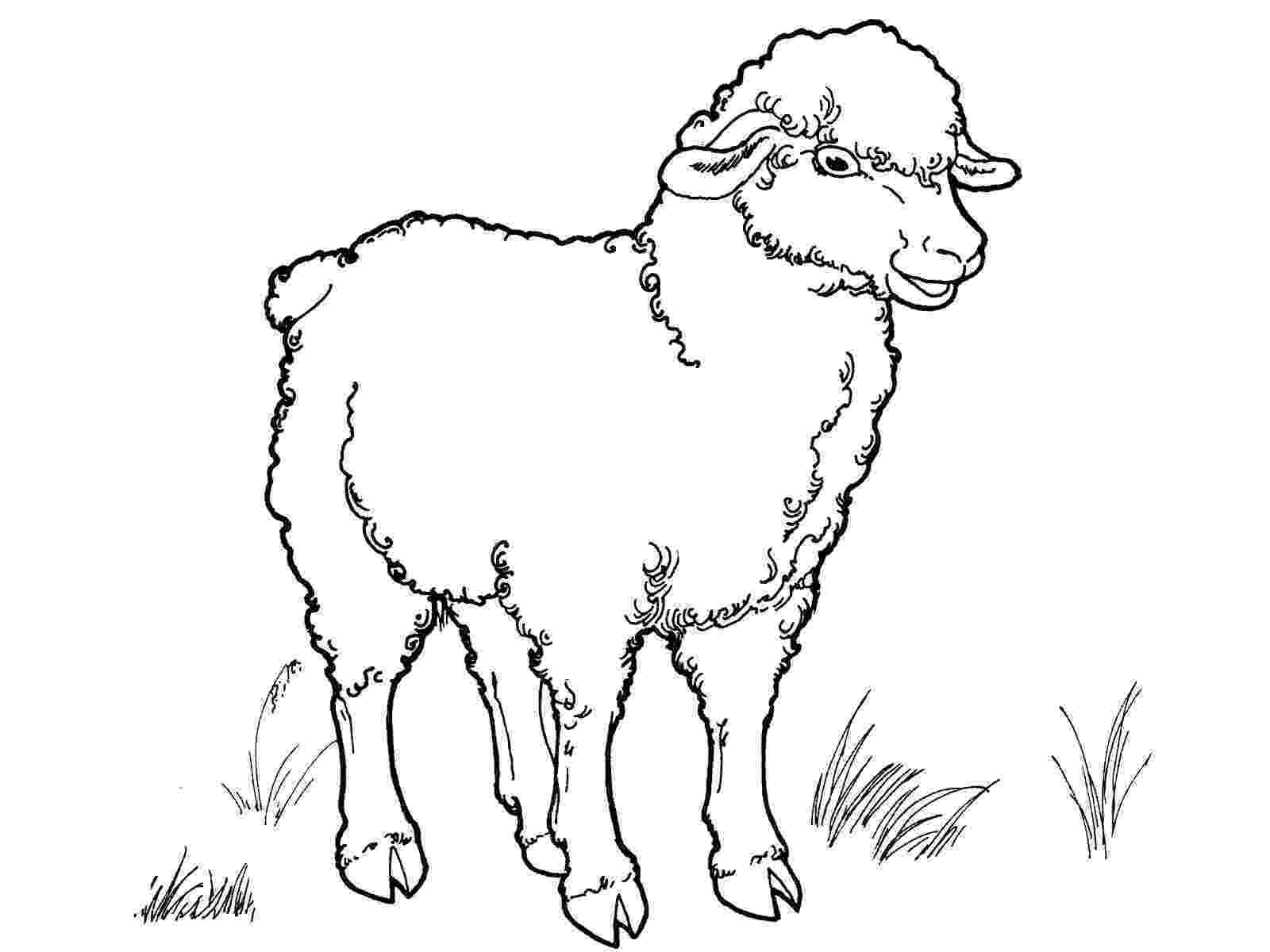 coloring book pages sheep free printable sheep coloring pages for kids book pages sheep coloring