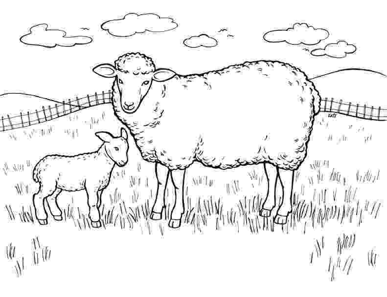 coloring book pages sheep free printable sheep coloring pages for kids pages coloring sheep book