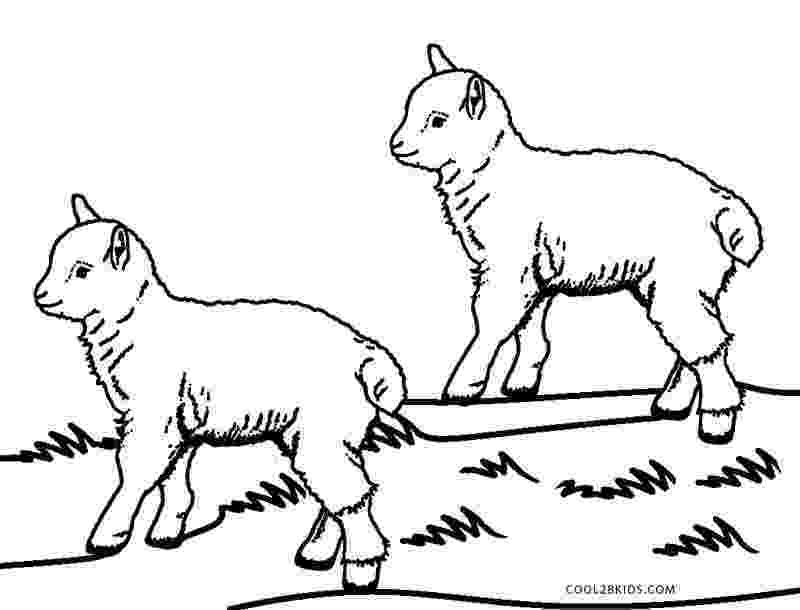 coloring book pages sheep free sheep drawings for kids download free clip art free pages sheep coloring book