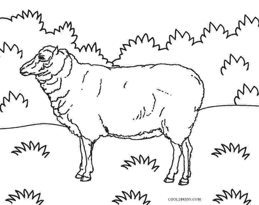 coloring book pages sheep sheep and lamb free farm animals coloring pages to print pages coloring sheep book