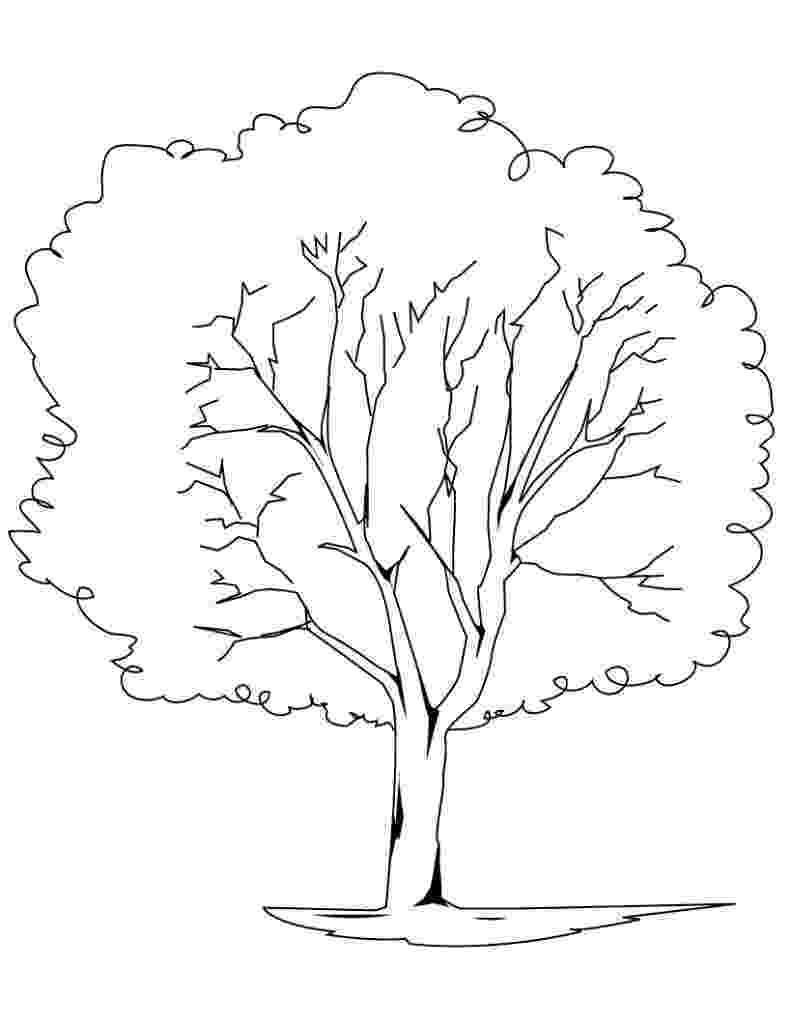 coloring book pages trees free printable tree coloring pages for kids book pages trees coloring 1 1