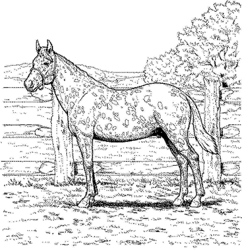 coloring horses coloring town coloring horses