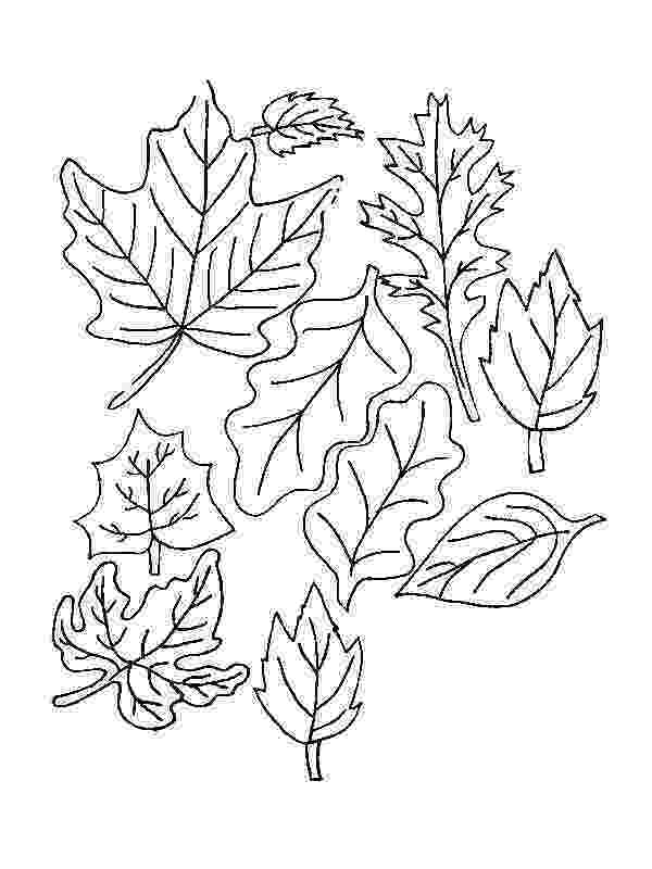 coloring leaves fall autumn leaves coloring page free printable coloring coloring leaves