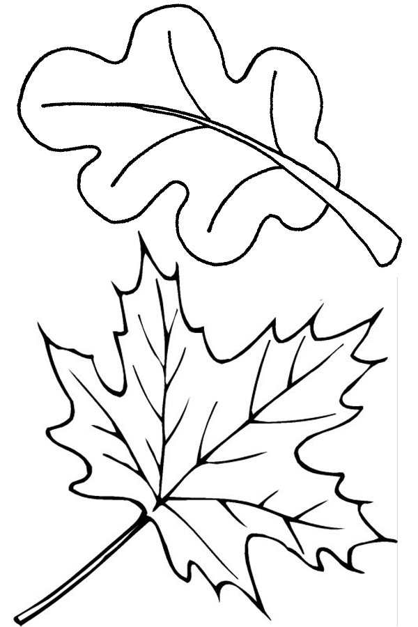 coloring leaves fall leaves and acorn coloring page from fall category leaves coloring