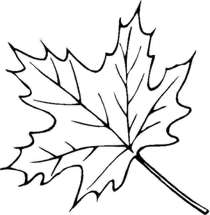 coloring leaves free printable leaf coloring pages for kids leaves coloring