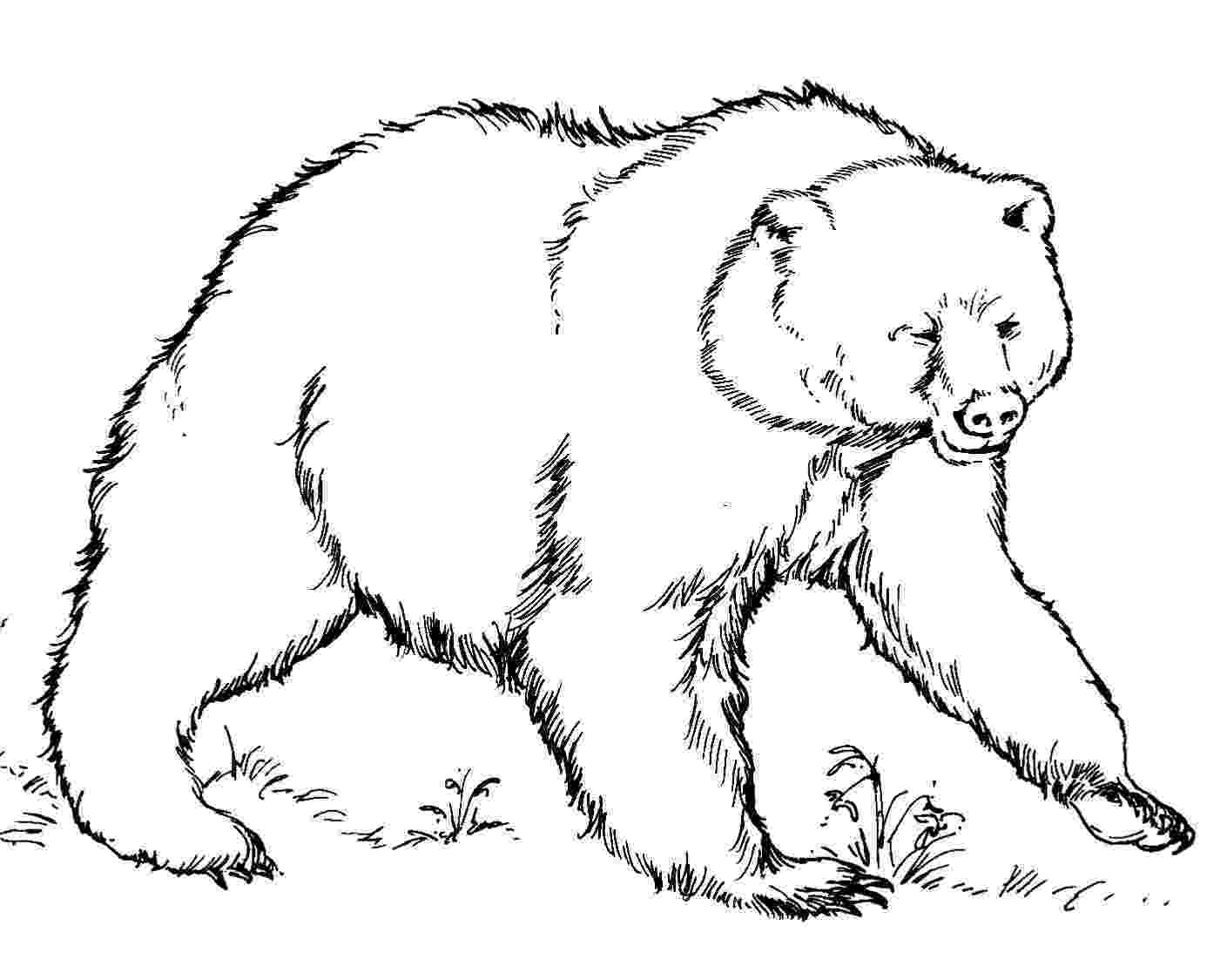 coloring page bear free printable bear coloring pages for kids coloring bear page