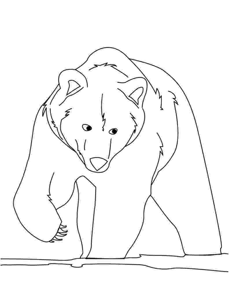 coloring page bear grizzly bear coloring pages getcoloringpagescom bear page coloring