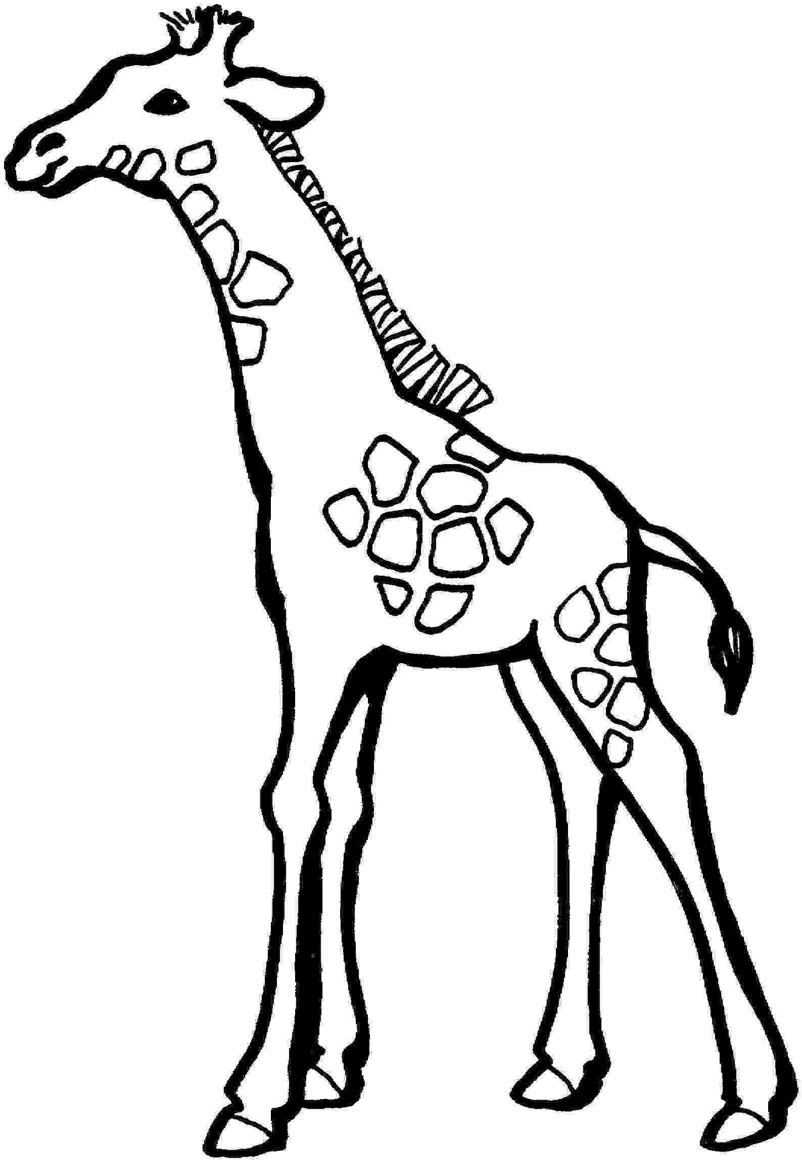 coloring page giraffe giraffe descprition and facts giraffe page coloring