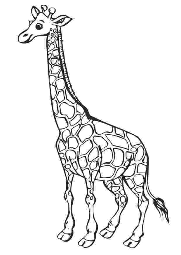 coloring page giraffe print download giraffe coloring pages for kids to have fun giraffe page coloring