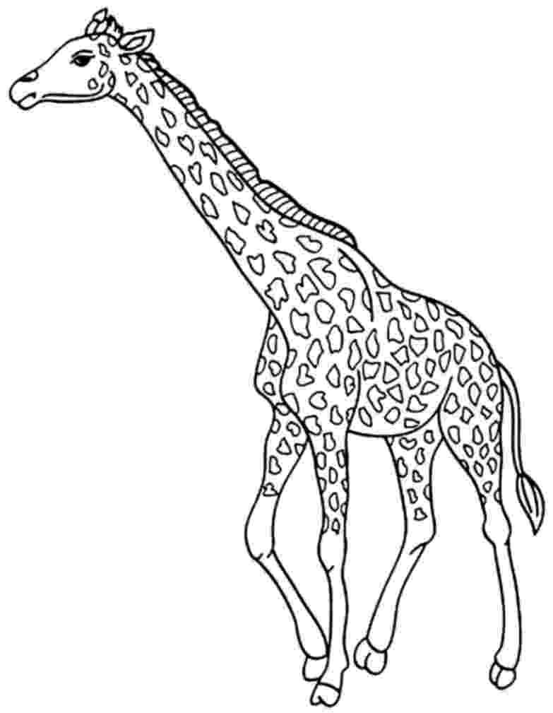 coloring page giraffe realistic giraffe coloring page free printable coloring page coloring giraffe