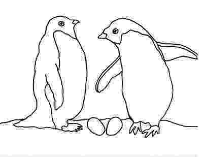 coloring page of penguin caroline arnold art and books december 2011 of penguin page coloring