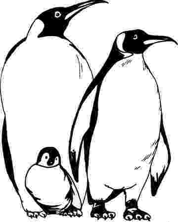 coloring page of penguin penguin coloring pages of penguin page coloring