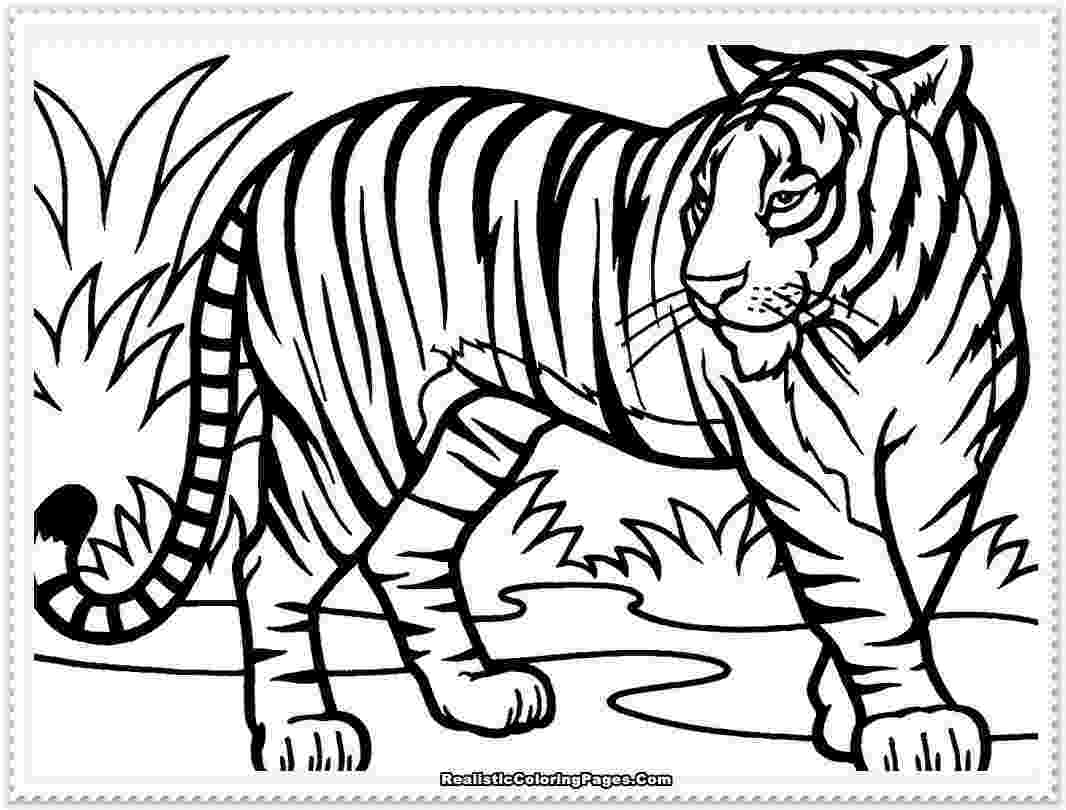 coloring page tiger free tiger coloring pages coloring page tiger