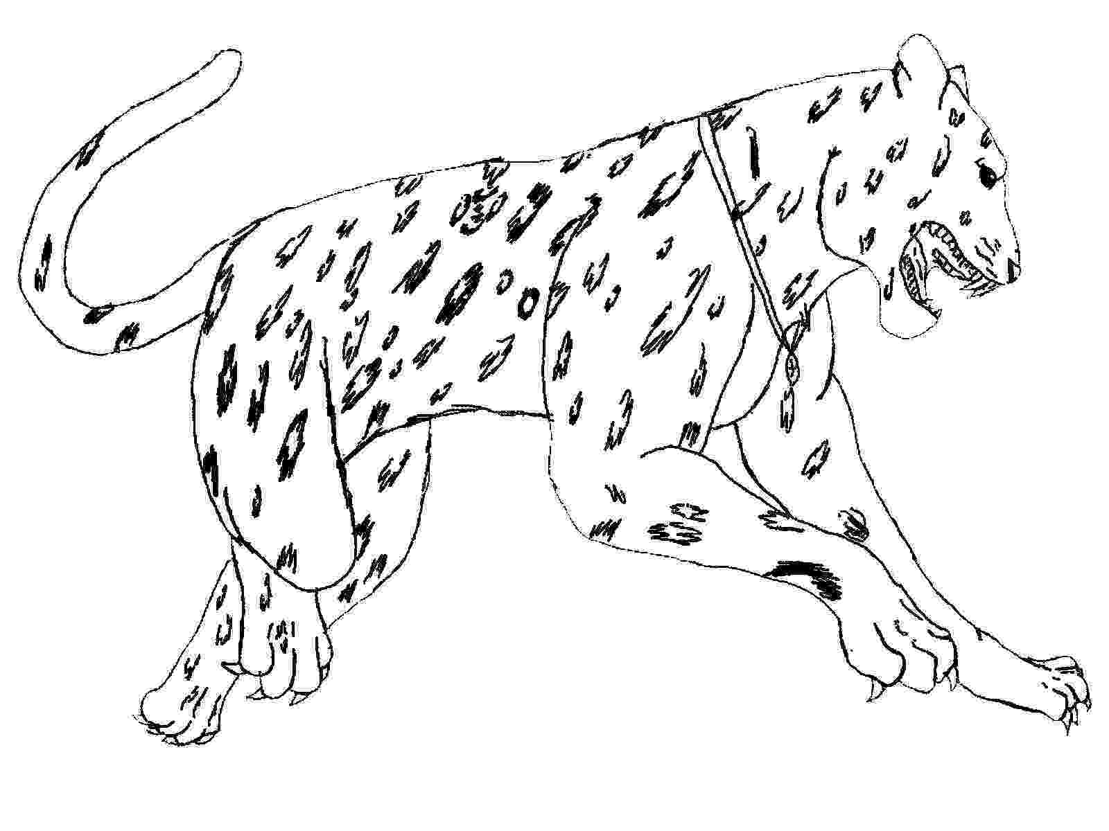 coloring pages animals realistic free jaguar coloring pages pages realistic coloring animals